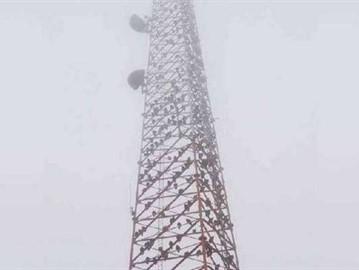 النسور تحتل برج فى تكساس
