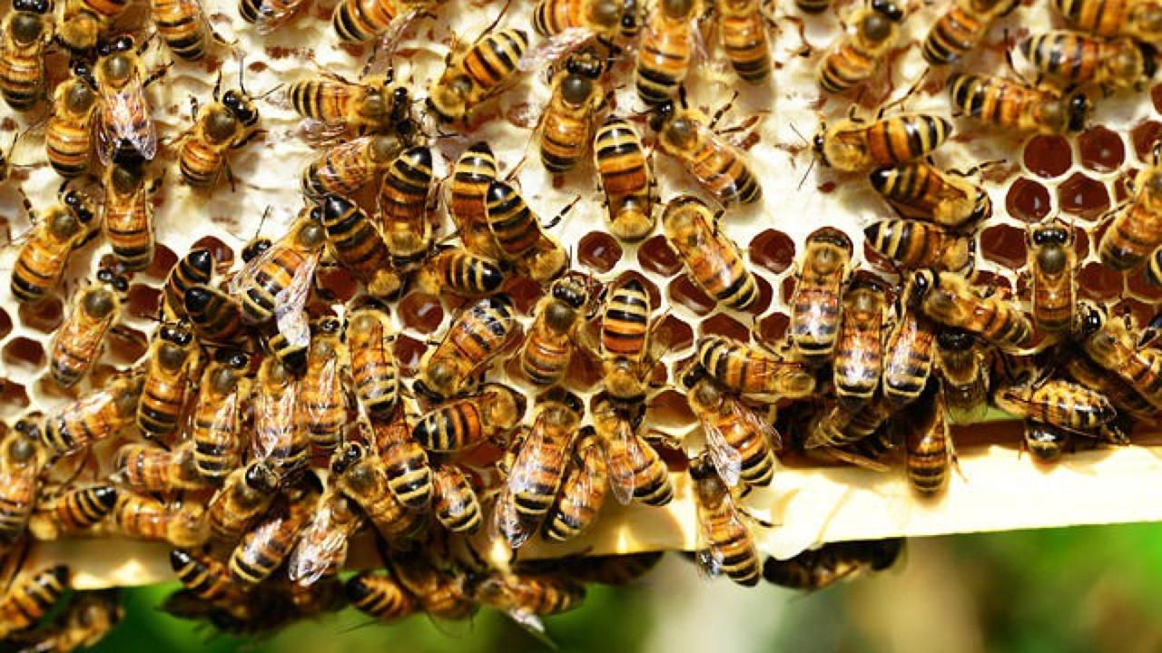 قاموس يضم حركات رقص يتم استخدامها مع النحل