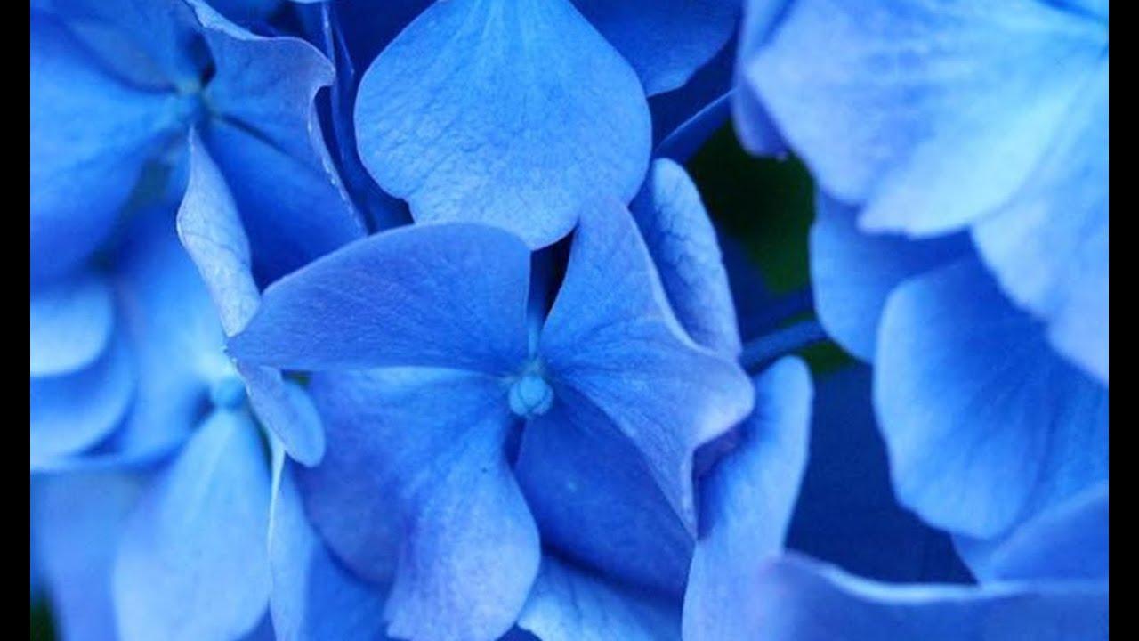 اللون الأزرق وتفسيره عندما يشاهد في المنام.