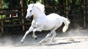 تفسير رؤية الخيل والحصان في المنام