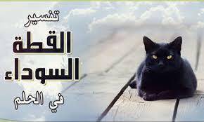 القطة السوداء وتفسير رؤيتها في المنام