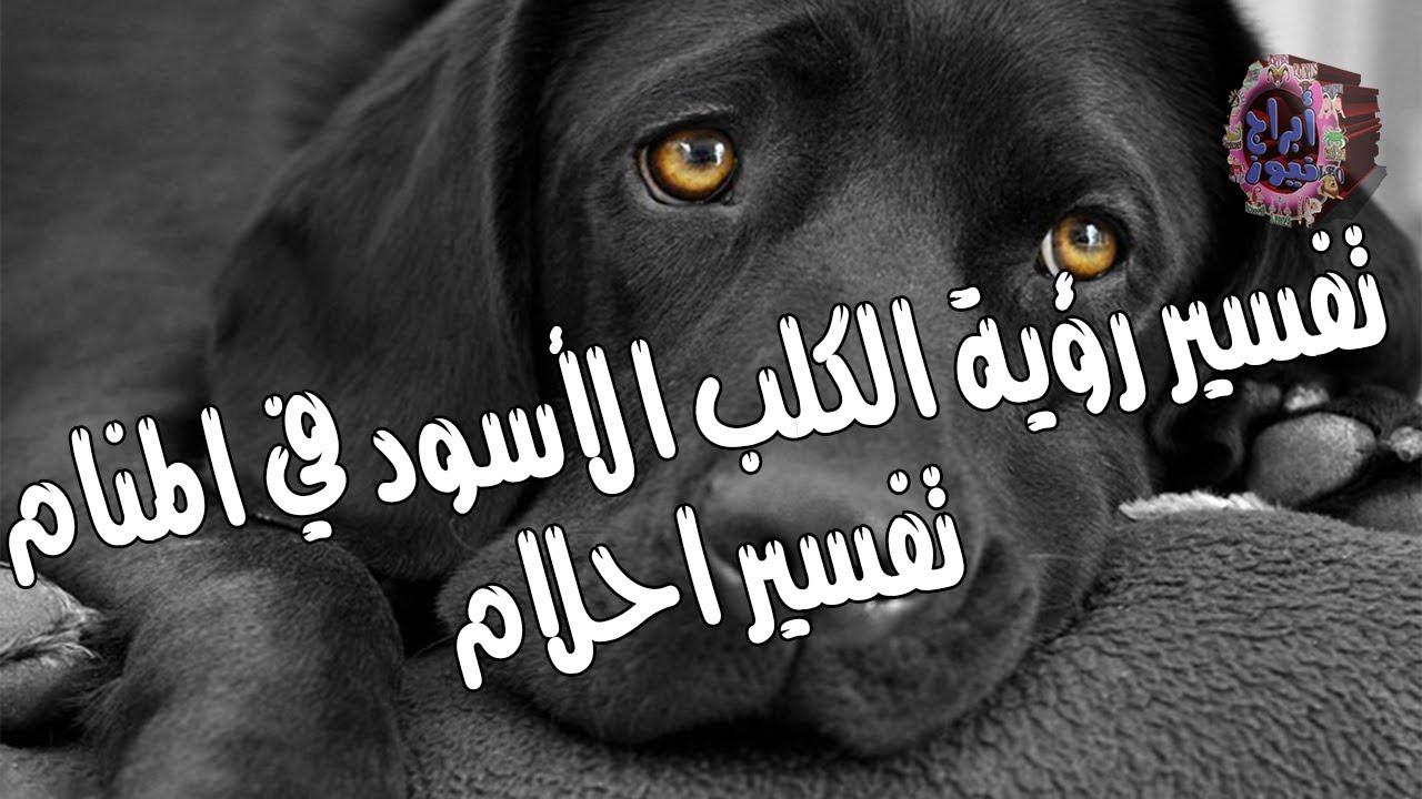 الكلب الأسود وتفسير رؤيته في الحلم