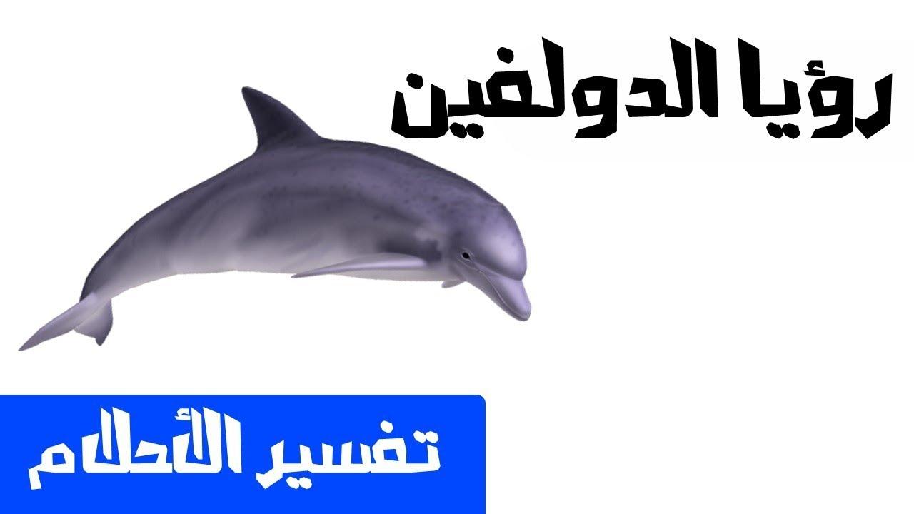 تفسير رؤية الدلفين في المنام