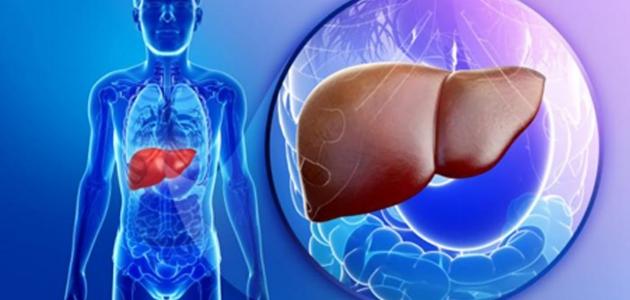 أعراض إنتفاخ الكبد عن حجمه الطبيعي (تضخم الكبد )