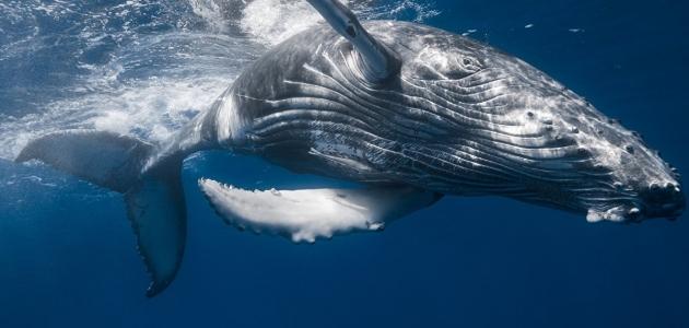 الحوت و دلالات تفسيره في الحلم