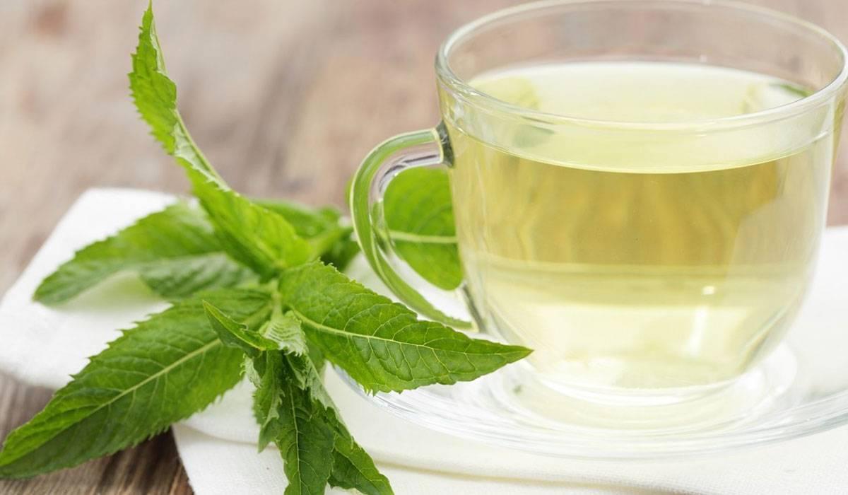 هل الأعشاب مفيدة في علاج التهاب الجيوب الأنفية بريم نيوز