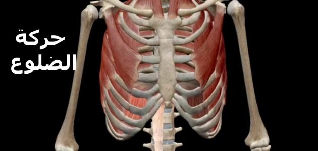 تعرف على التهاب الغضروف الضلعي أسبابه والأعراض