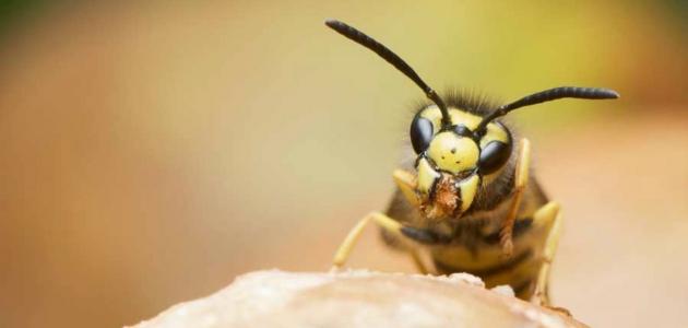 تعرف على حساسية سم الحشرات وضررها لجسم الإنسان