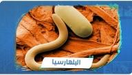 تعرف على داء البلهارسيا أنواعها وأعراضها وطرق الوقاية